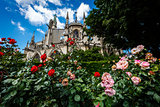 Notre Dame de Paris Cathedral with Red and White Roses in Foregr