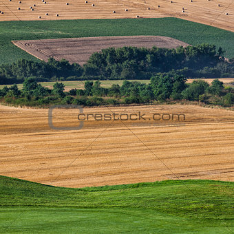Cultivated fields
