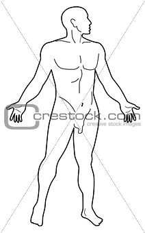 Male Human Anatomy Silhouette
