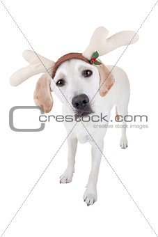 Christmas Reindeer Dog