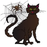 Cat and spider