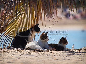 Cat's gang