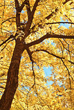 Tree branches in autumn sunlight
