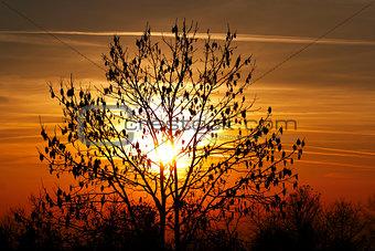 autumn tree in the sunset