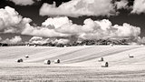 Monochrome wheat field with straw bales and cloudy sky