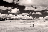 Monochrome curvy barley field with straw bales and cloudy sky
