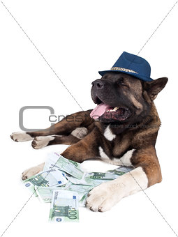 akita is in the money