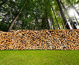 Pile of Chopped Firewood in the Woods