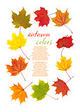 Colorful autumn leaves border