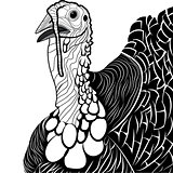 Turkey bird head as thanksgiving symbol
