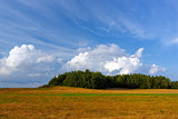 Summer landscape with a field and clouds