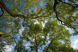 Trunks of trees and blue sky