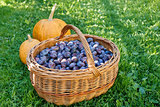 ripe plums in basket