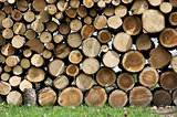 Cut Wood Logs