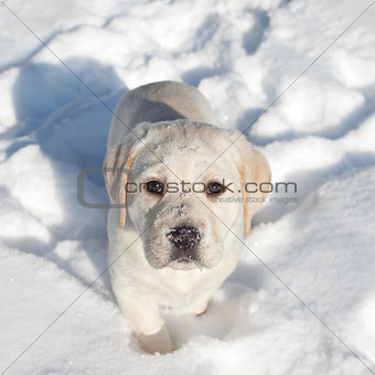 Winter Dog Snow