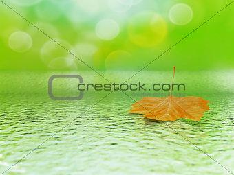 single orange mapple leaf in water on a tender blurred background