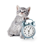 adorable kitten with alarm clock