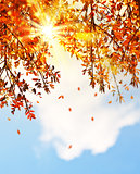 Beautiful autumn tree leaves background border