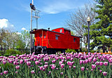 red caboose with tulips