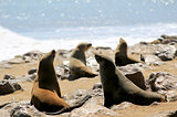 Colony of seals at Cape Cross Reserve, Atlantic Ocean coast