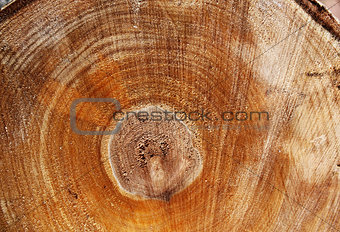 Cut of a log