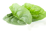 Two fleshy spinach leaves