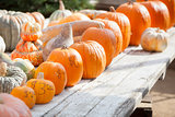 Fresh Orange Pumpkins and Hay in Rustic Fall Setting