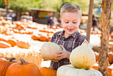 Little Boy Gathering His Pumpkins at a Pumpkin Patch