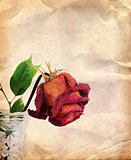 Vintage background with dried rose