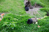 Cute rabbits sitting on grass and eating