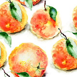 Watercolor illustration of Oranges