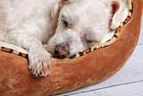 Sleeping dog in pet bed