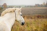 White horse. Fall