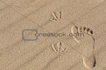 footprint and seagull tracks