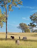 Australian rural landscape view