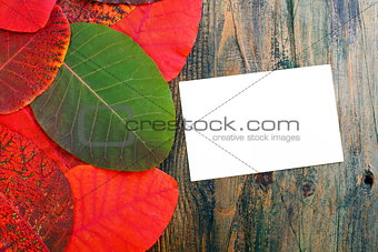 Bright autumn leaves and card.