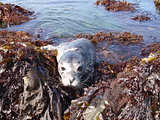 Seal Pup at the Tide Pools