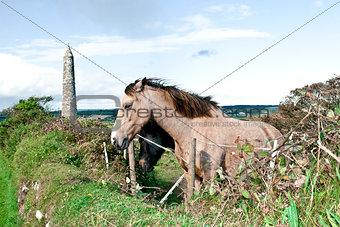 pair of beautiful Irish horses and ancient round tower
