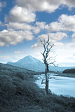 single tree in Donegal scenic view blue tone