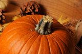 Pumpkin closeup