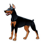 Dobermann Pinscher.