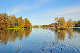 St. Petersburg, Gatchina. Golden Autumn