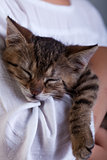 Sleeping kitten in owner arms - closeup