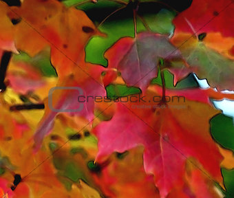 Autumn MAPLE leaves Abstract Fantasy