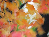 Autumn MAPLE leaves Fantasy