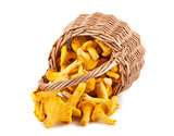 Sprinkled wicker basket with chanterelle mushrooms