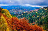 Landscape view of colorful autumn foliage forrest at cloudy day