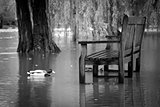 Flooded Riverside Picnic Bench