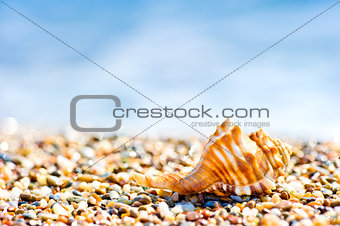 Seashell on sand and pebble beach by the sea.