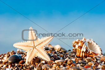 Starfish and Seashell on sand and pebble beach by the sea